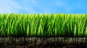 Zasnivanje travnjaka uz navodnjavanje