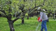 Jesenje đubrenje voćnjaka